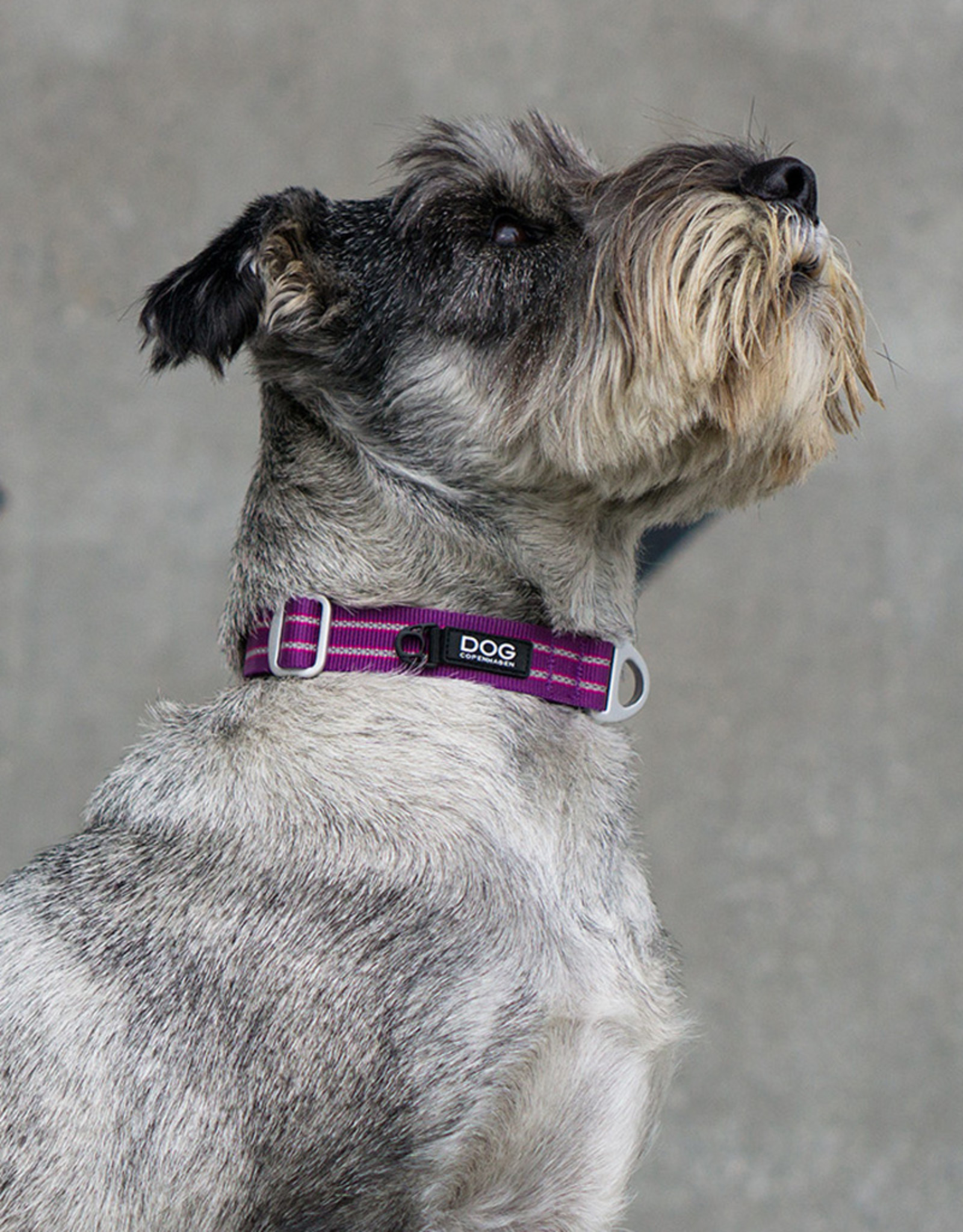 Dog Copenhagen Urban Style Collar