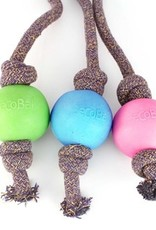 Beco pets Ball on Rope