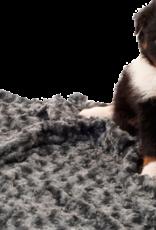 51 Degrees North Honden deken - curly blanket