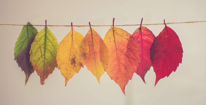 Help het is herfst!