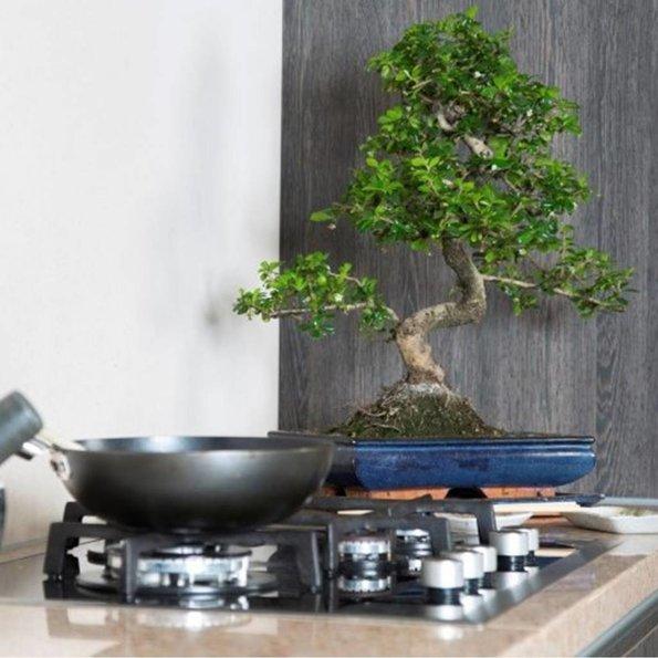 Chinese Bonsai - Set van 2