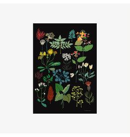 Plant Study A3 Print