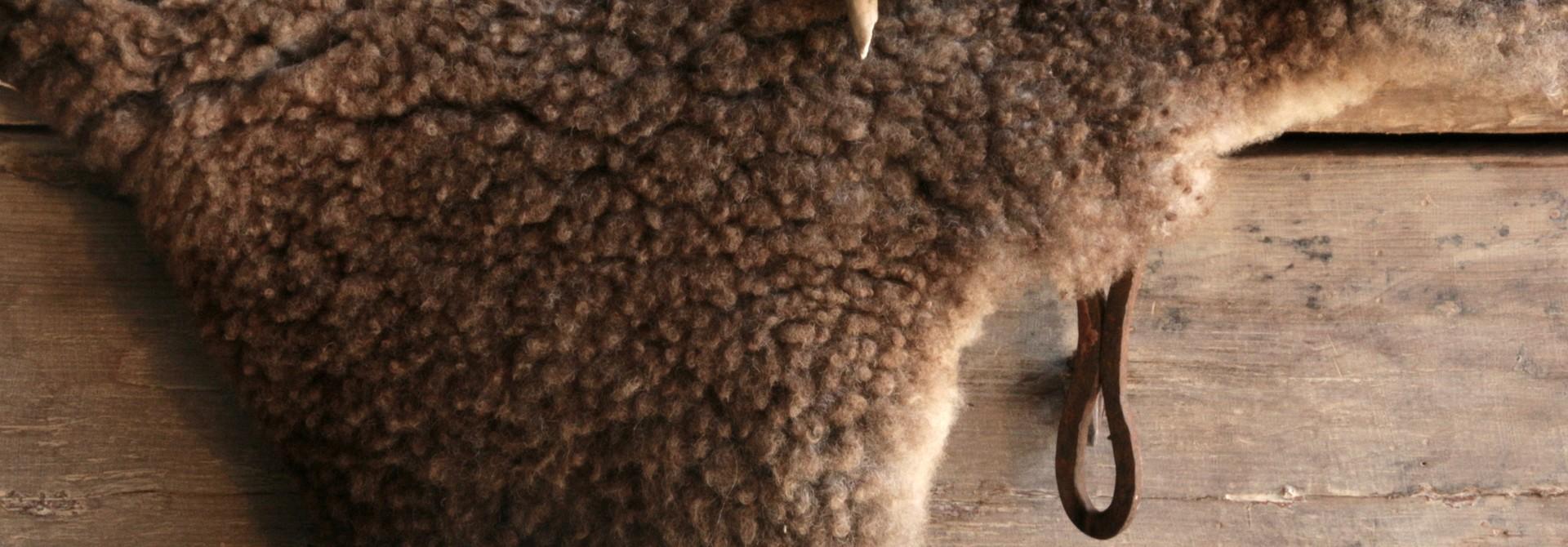Sheep's fur