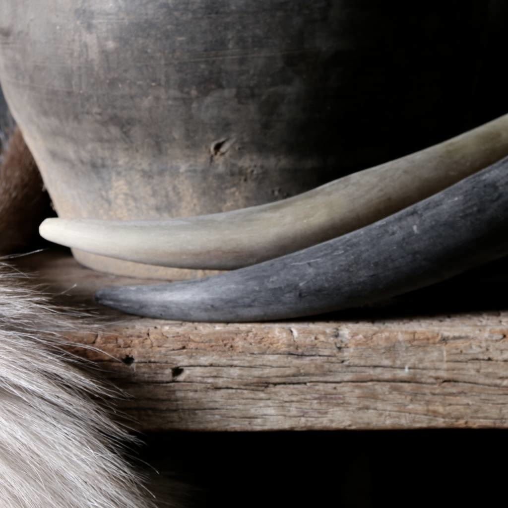 Cow Horn matt finisch-2