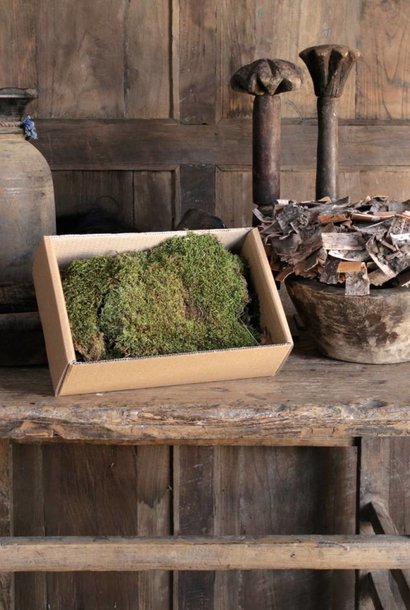 Box of dried plate of moss