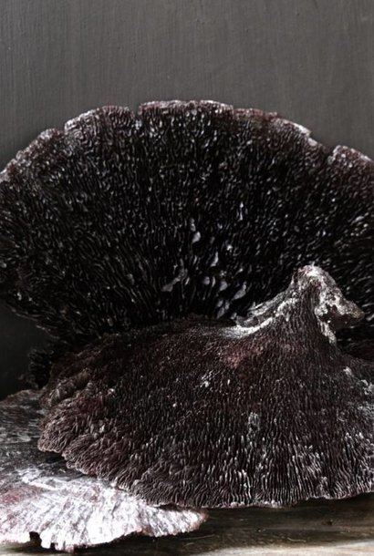 Sponge mushroom Black / Silver-wash