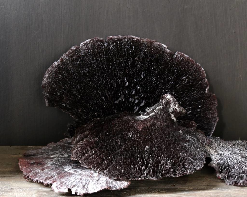 Sponge mushroom Black / Silver-wash-1