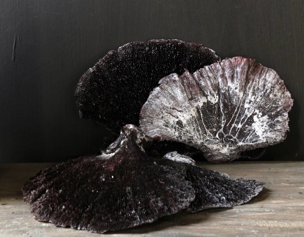 Sponge mushroom Black / Silver-wash-2