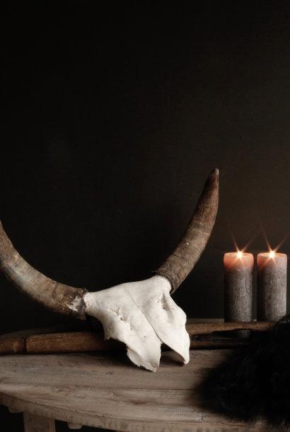 Cow horn skull