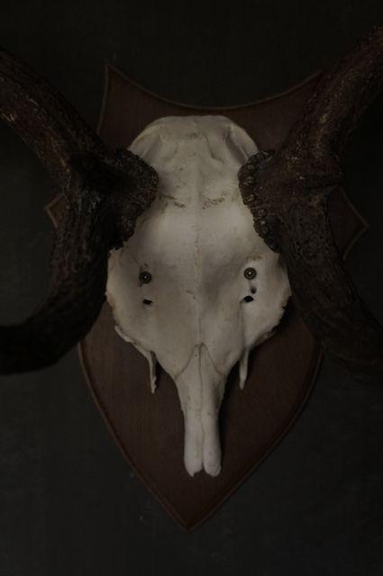 Herten gewei-5