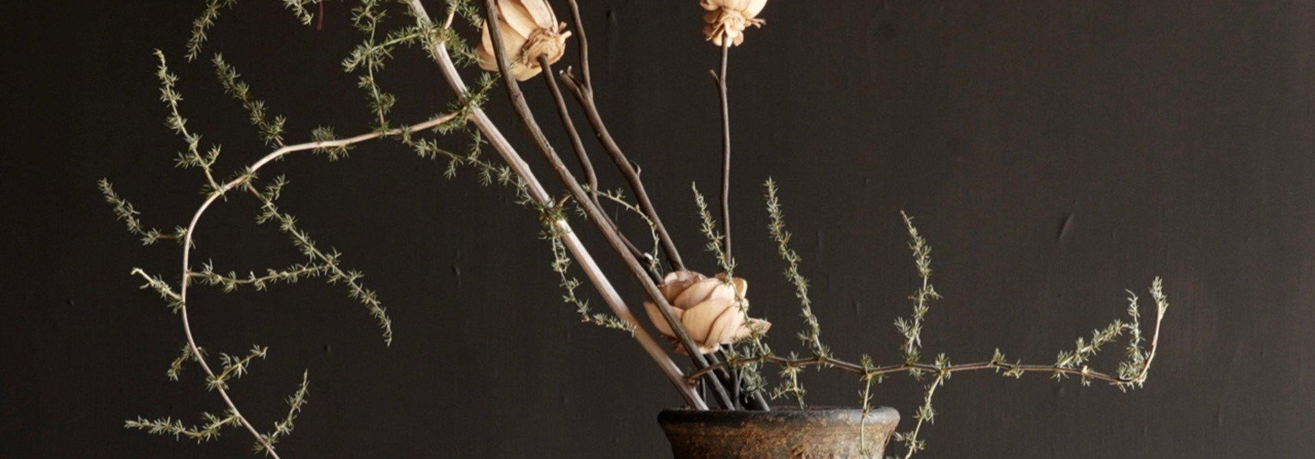 Bündel Schaumblumen auf Zweig