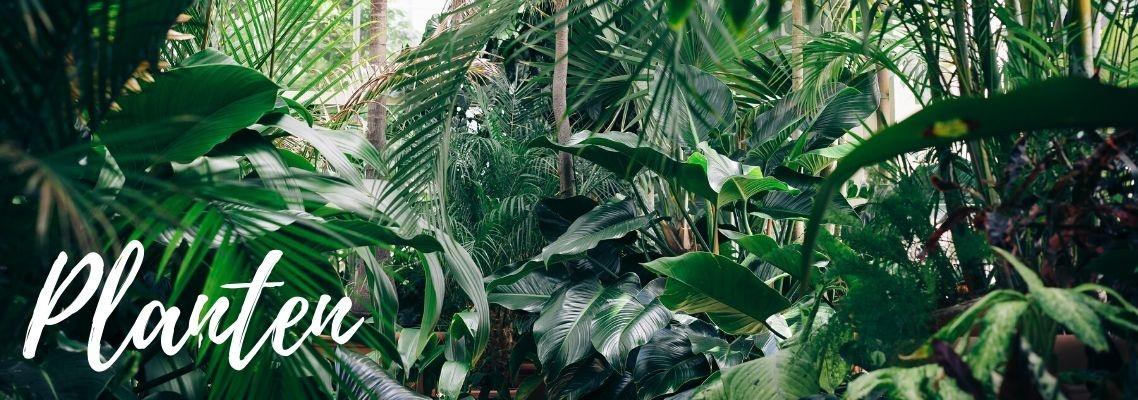 Planten shoppen