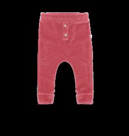 Ammehoela AM - Harem Old Pink - Kris