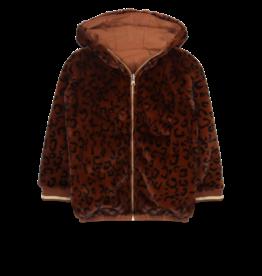 Ammehoela AM - Jas - Lola Brown Leopard