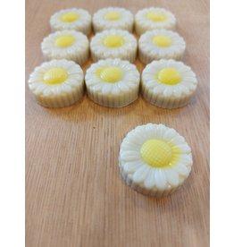 Mini praline margrietje wit praliné bresilienne