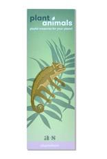 another studio Golden plant hanger - Chameleon