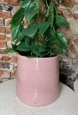 GRUUN Philodendron scandens ∅24 h120