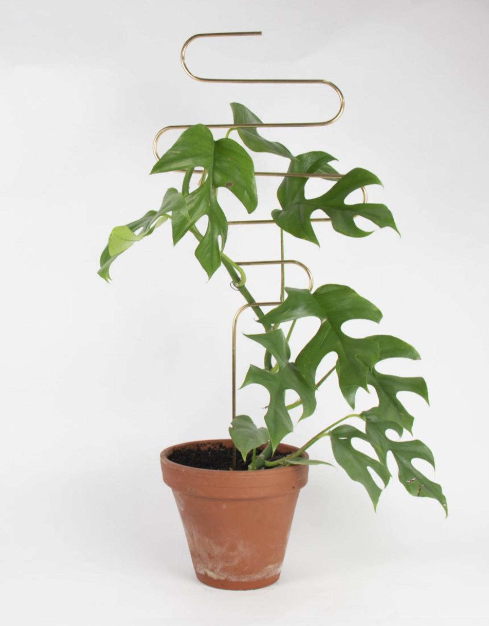 Botanopia Golden Plant Stake - Squiggle