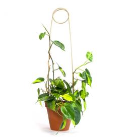 Botanopia Golden Plant Stake - Pin