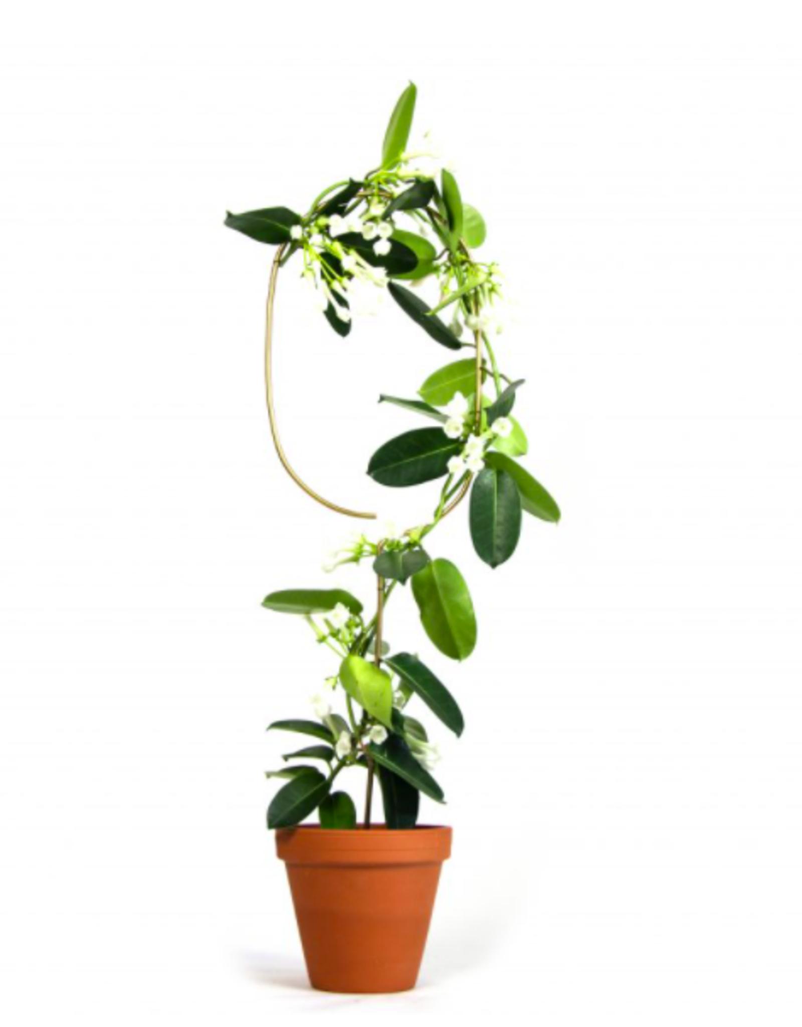 Botanopia Golden Plant Stake - Arch