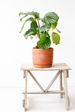 House of Thol Waterworks - Keep your plants happy