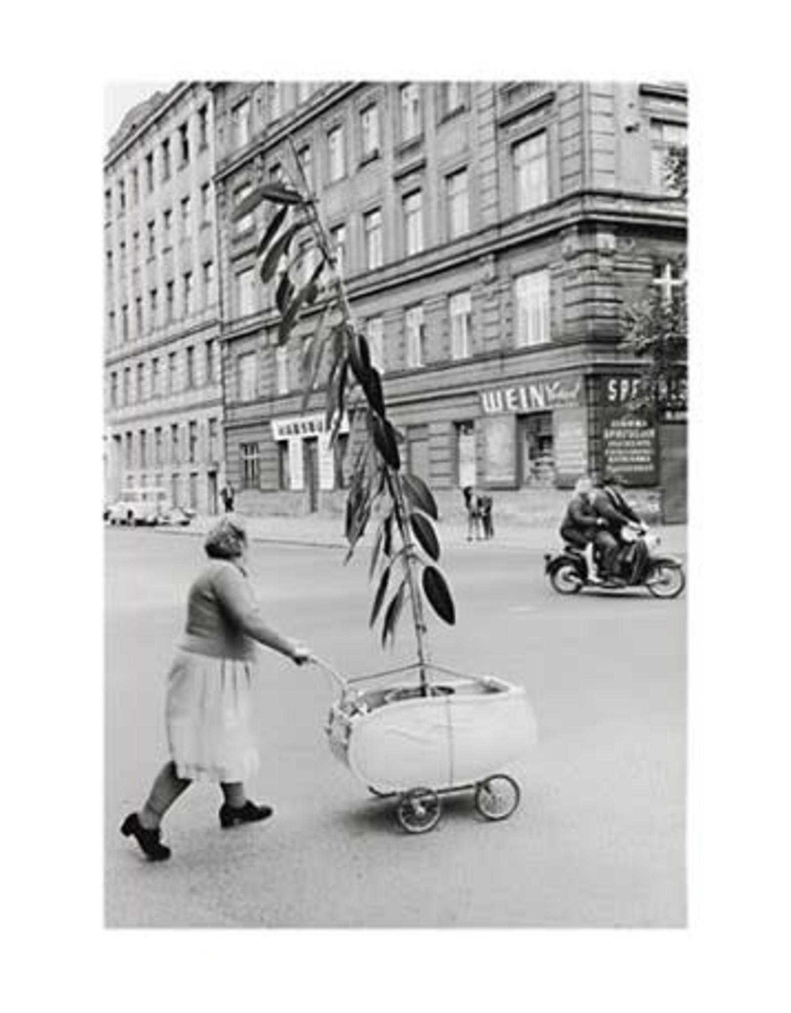 Plaizier Unusual transport of a plant