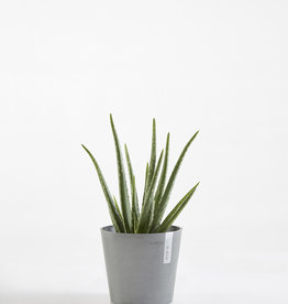 Ecopots Ecopot 'Amsterdam' - Mini Blue Grey ∅17