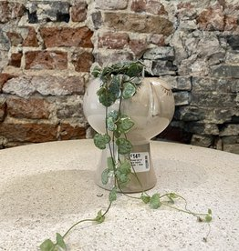 GRUUN Ceropegia woodii variegata ∅8 h10