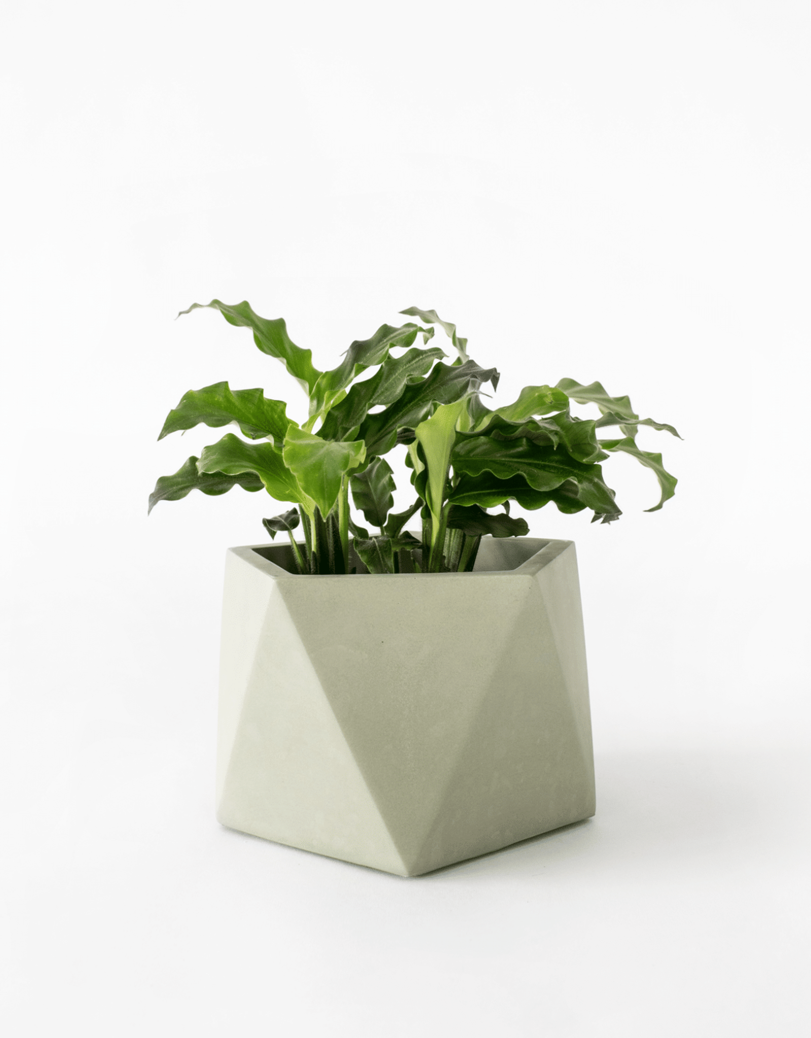 House Raccoon Mare Planter - Large - Olive Green Ø 8,5 cm
