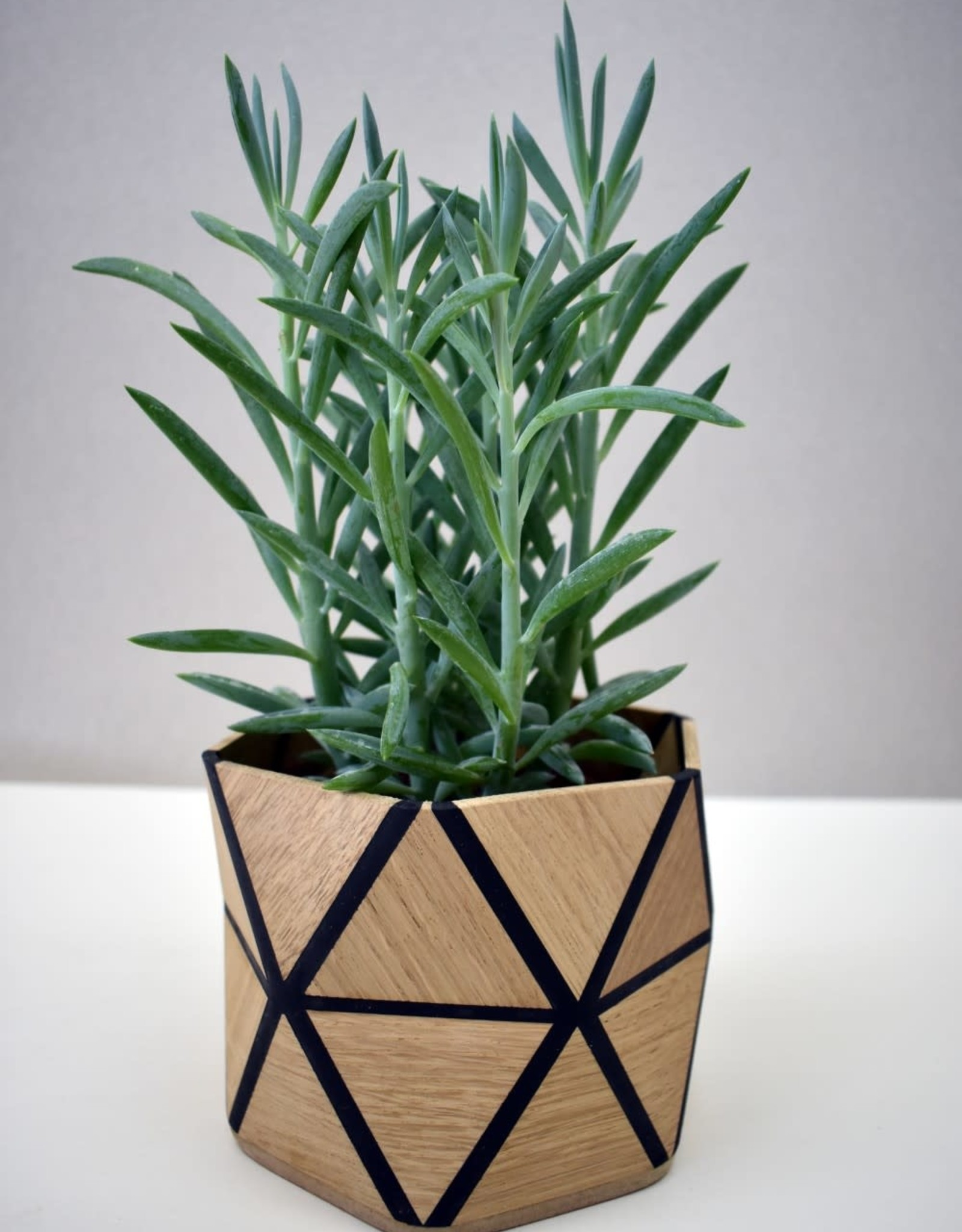 Karooz Pansy - Triangle - Oak - H12,5 x B13,5