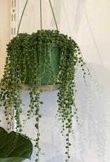 GRUUN Senecio Rowleyanus ∅14 (hangpot)