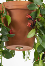 Botanopia Bolty - Hanging system for plant pots