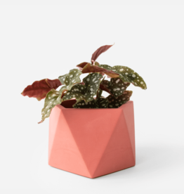 House Raccoon Mare Planter - Large - Pomegranate Ø 8,5 cm