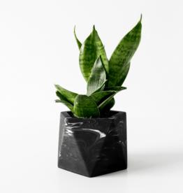 House Raccoon Mare Planter - Medium - Black Marble Ø 5,5 cm
