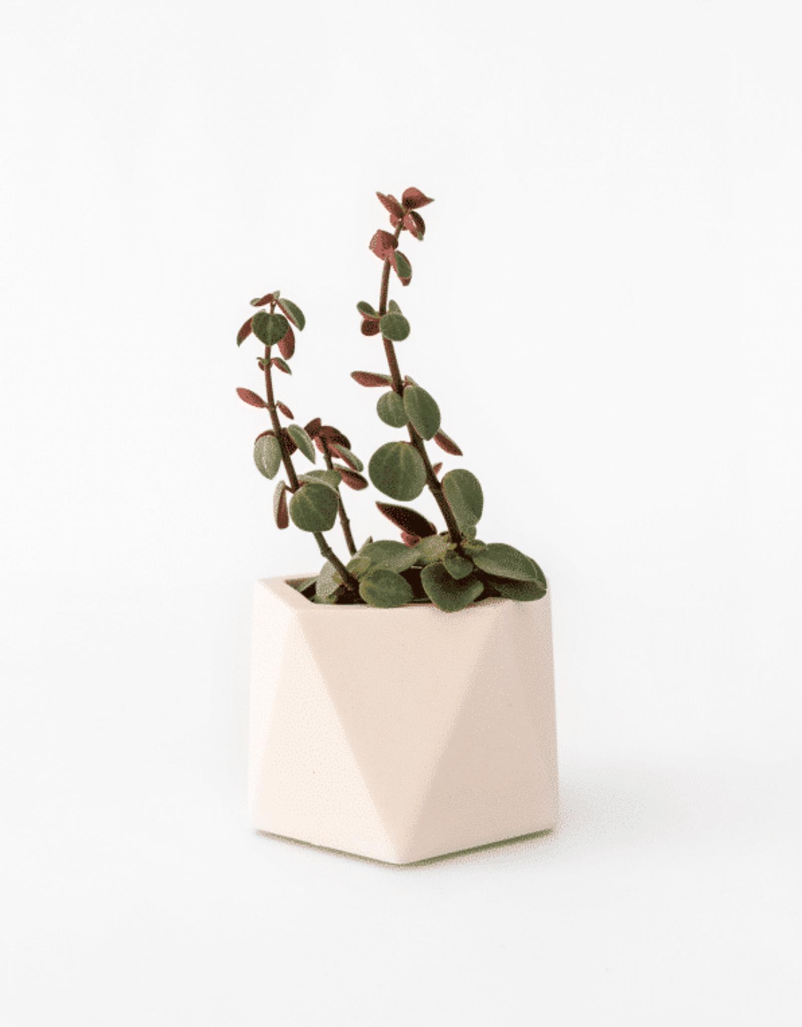 House Raccoon Mare Planter - Medium - Millenial Pink Ø 5,5 cm