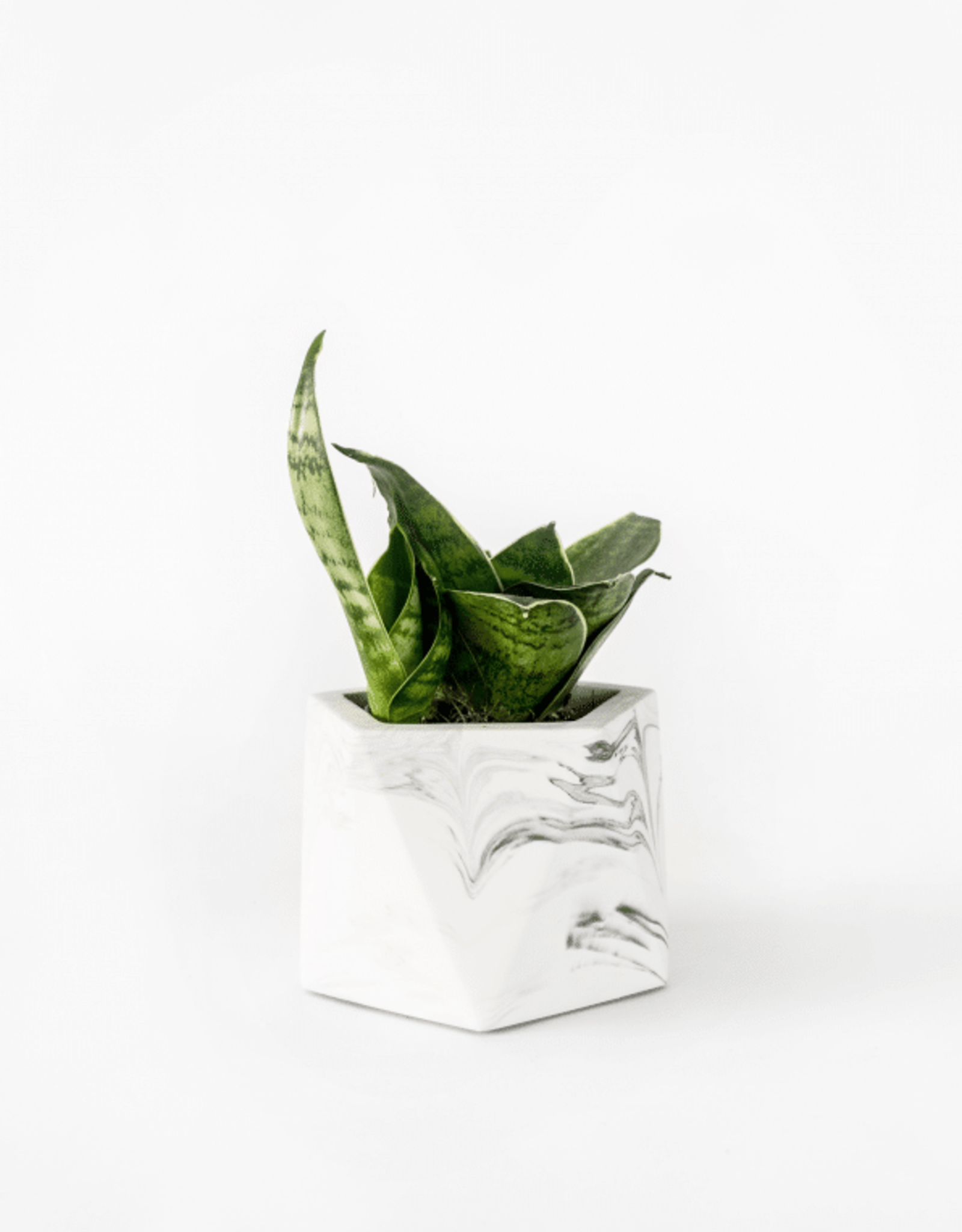 House Raccoon Mare Planter - Medium - White Marble Ø 5,5 cm