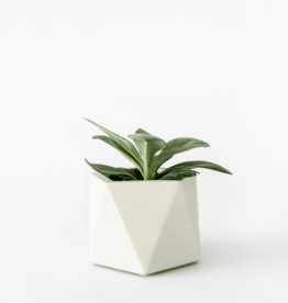 House Raccoon Mare Planter - Medium - Silver Green Ø 5,5 cm