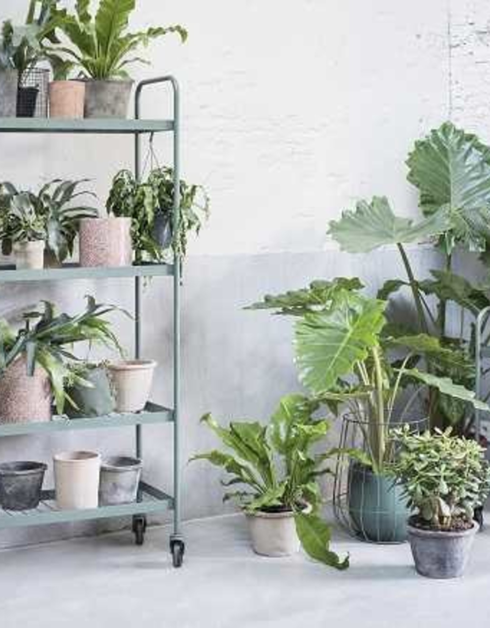 Plant Rack Army Green 35X100 H170