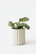 House Raccoon Mila Planter - Small - Silver Green Ø 6 cm