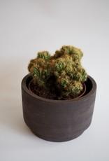GRUUN Cactus Ø15 - Cereus repandus