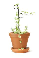 Botanopia Zwarte mini plantensteun - Perch