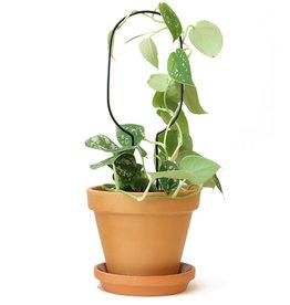 Botanopia Tuteur pour plantes noir Mini - Cercle
