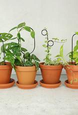 Botanopia Black Plant Stake Mini - Hoop