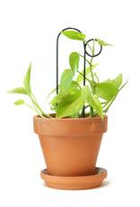 Botanopia Zwarte mini plantensteun - Bump
