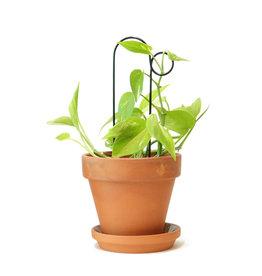 Botanopia Tuteur pour plantes noir Mini - Bump