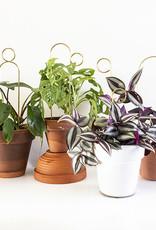 Botanopia Gouden mini plantensteun - Pompom