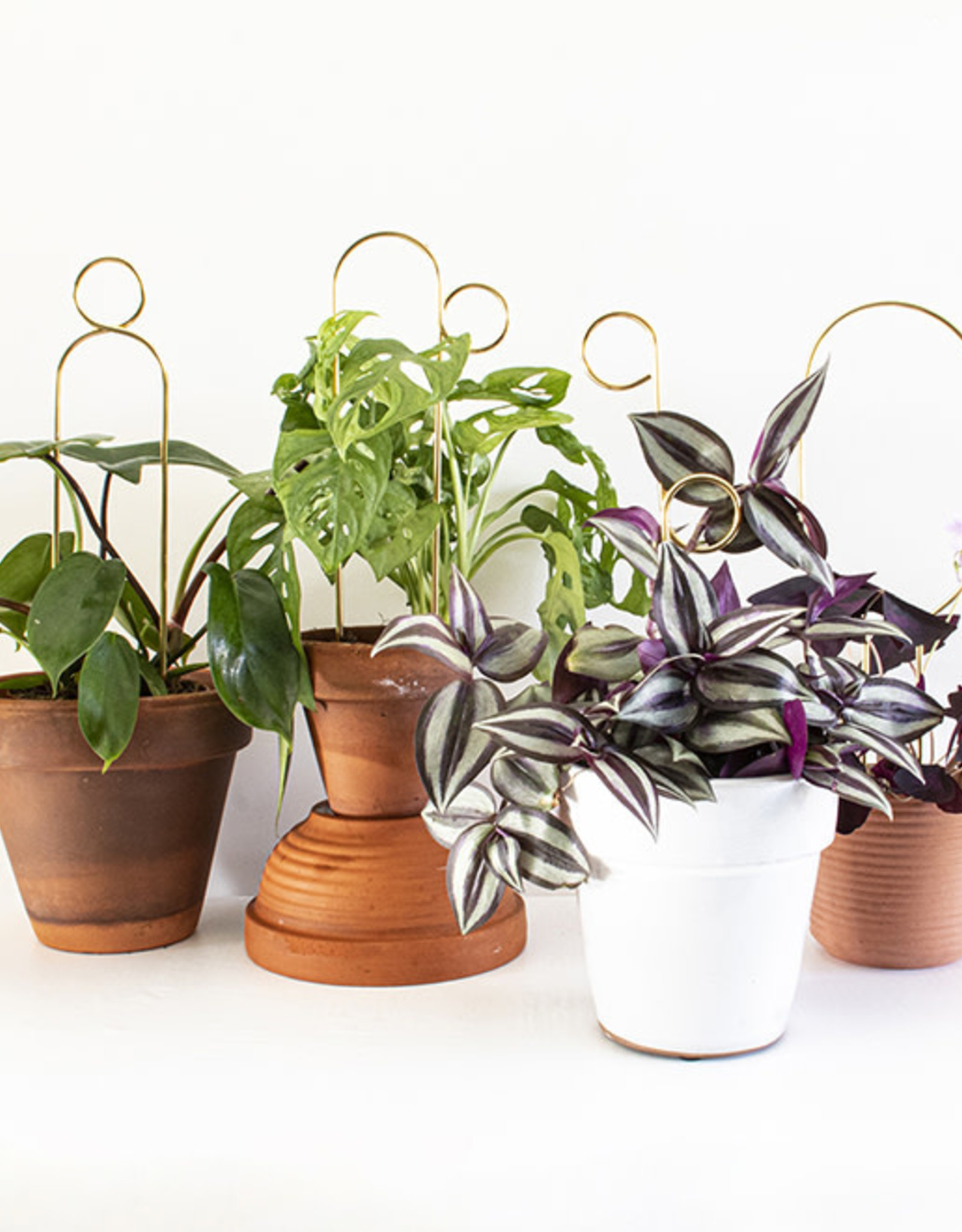 Botanopia Gouden mini plantensteun - Hoepel