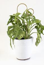 Botanopia Gouden mini plantensteun - Bump