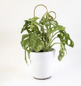 Botanopia Tuteur pour plantes or Mini - Bump