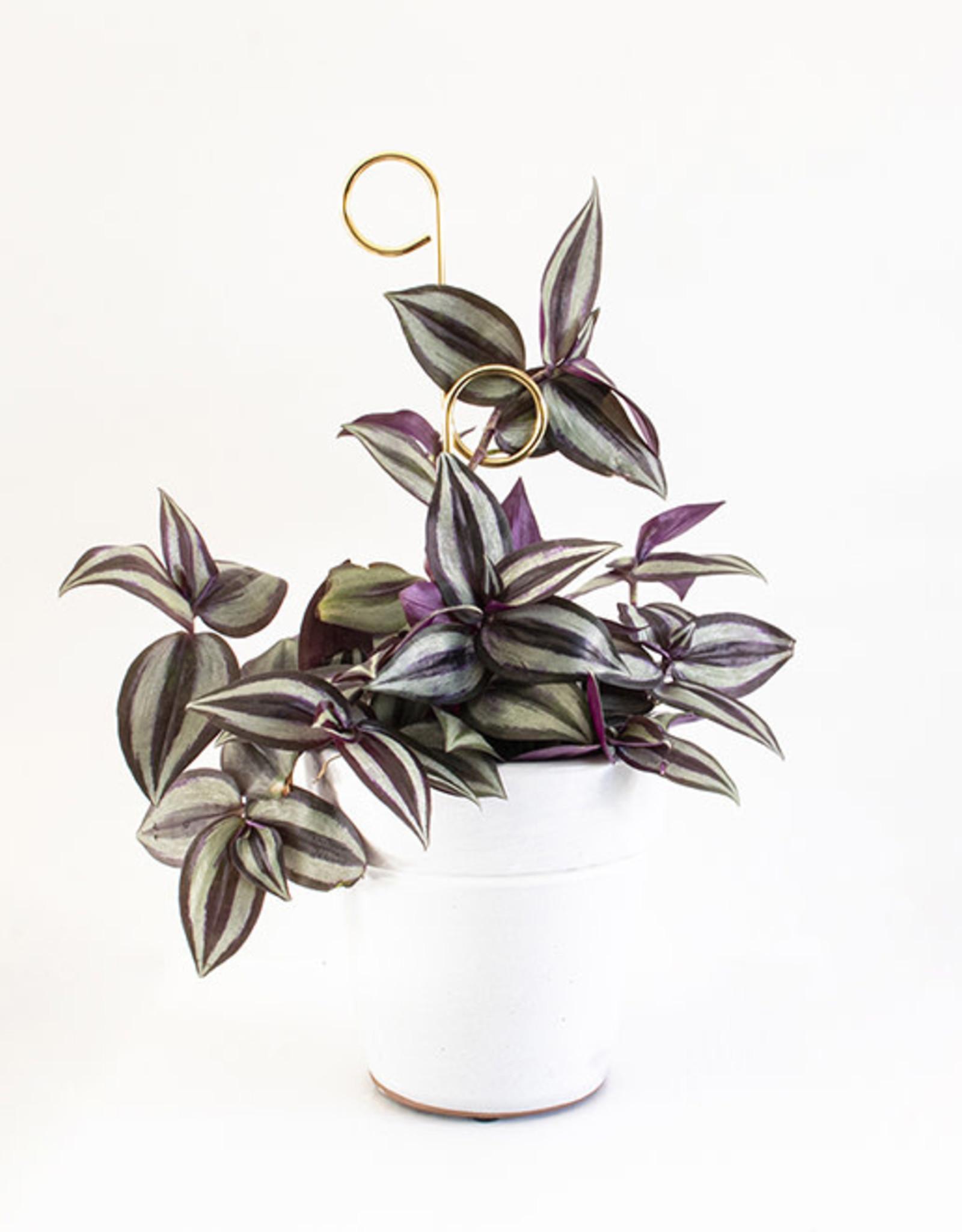 Botanopia Copy of Golden Plant Stake Mini - Bump
